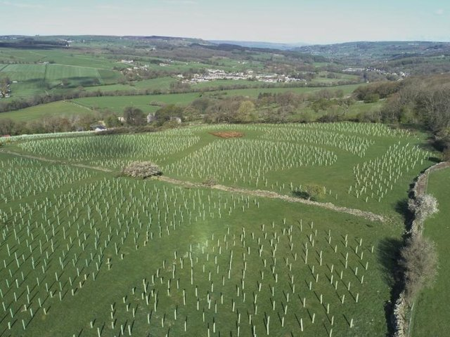 Thousands of trees planted in Harrogate district courtesy of Make It Wild - This picture shows the Dowgill Grange site in Summerbridge.