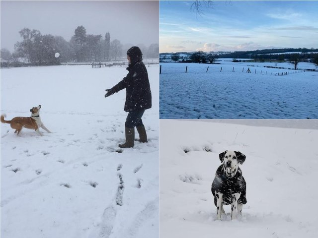 18 of your super snowy pictures from across Harrogate District
