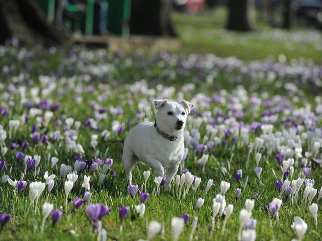 Enjoying spring on The Stray in  spring (Photo: Gerard Binks)