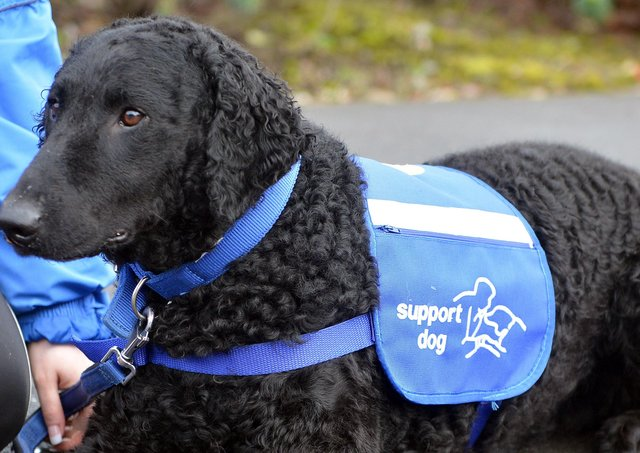 Support Dogs - for autism for epilepsy for disability.