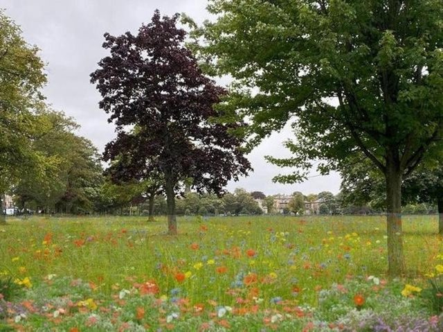 This is how the Green Party envisage the Stray will look with wildflowers. Photo: Harrogate and District Green Party.