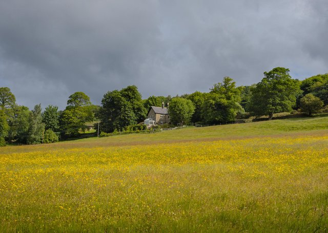 A Nidderdale meadow. Picture: David Tolcher