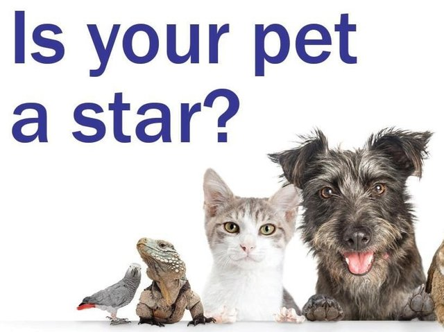 Vote for your favourite pet from our shortlist.