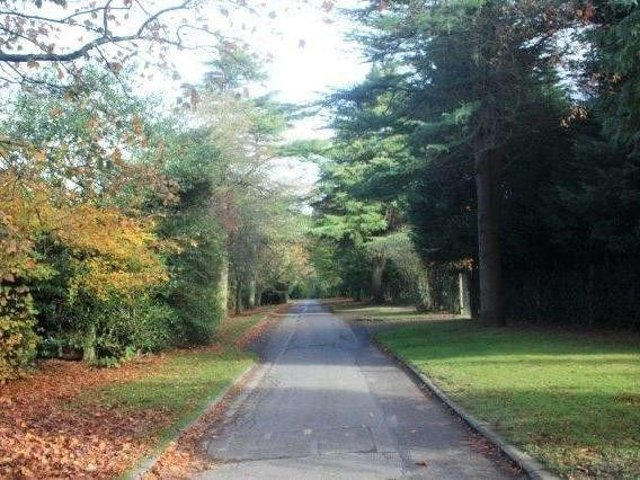 The Pinewoods - One of Harrogate's most popular outdoors spots.