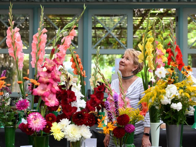 Christine Ledger from Harrogate admires the blooms at Harrogate & District Allotment's Federation annual show in the Valley Gardens in Harrogate. (Picture Gerard Binks)